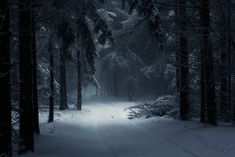 Dark Winter Forest Wallpaper For Android · World Desktop HD Wallpapers Winter Photography, Outdoor Photography, Forest Photography, Landscape Photography, Nos4a2, Snow Covered Trees, Forest Wallpaper, Hd Wallpaper, Dark Winter