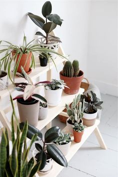 If you're looking for a simple way to organize and display all of your plants, then you need to check out these awesome indoor / outdoor DIY plant stand ideas for inspiration! #plantstand #gardenideas #indoorplants #diy Modern Plant Stand, Diy Plant Stand, Indoor Plant Shelves, Indoor Plants, Indoor Gardening, Indoor Outdoor, Garden Shelves, Indoor Cactus, Cactus House Plants