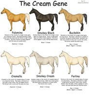 Equine Colors- White Patterns by ~Kholran on deviantART