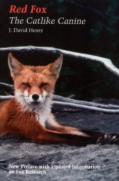 Red fox: The Catlike Canine (Smithsonian Nature Book) by J David Henry, http://www.amazon.com/dp/1560986352/ref=cm_sw_r_pi_dp_s1Dbrb1JPT63K