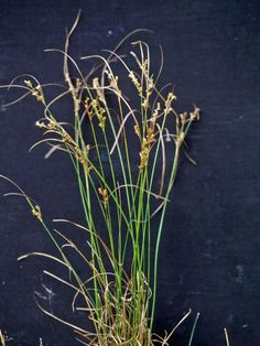 learn how to identify and eradicate even the toughest types of weeds - Types Of Weeds