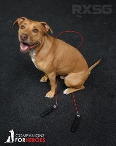 Rx Jump Ropes is teaming up with Companions for Heroes with this special edition Companions for Heroes jump rope. 15% of every sale will go to Companions for Heroes to help aid in the recovery of veterans, active duty military, LEO, and first responders suffering from PTS by pairing them with rescued shelter animals in need of loving homes. Grab yours now at www.rxsmartgear.com