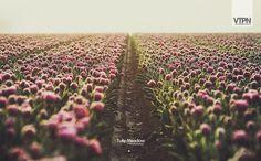 Tulip Meadow  Copyright © 2008-2010 De Vetpan Studios. All rights reserved