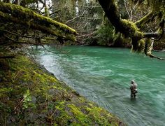 Fly Fishing, the Northwest's Queen Charlotte Islands