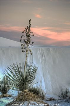 White Sands, Tularosa Basin, Chihuahuan Desert - New Mexico Travel New Mexico, New Mexico Usa, Beautiful World, Beautiful Places, Beautiful Pictures, White Sands New Mexico, White Sands National Monument, Desert Dream, Land Of Enchantment