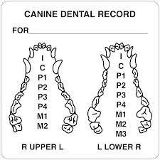 Canine Dental Numbering System