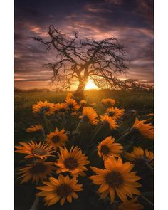 """8,557 Likes, 183 Comments - Ryan Dyar (@ryandyar) on Instagram: """"🌼 An image from almost five years ago in one of my favorite/least favorite places in the Pacific…"""""""