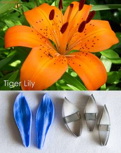 Tiger Lilly cutters and veiners, sugar flowers, gumpaste flowers, cutters, veiners, Tiger lilly Sugar Paste, Gum Paste, Edible Diamonds, Tiger Lilly, First Dates, Candy Shop, Sugar Flowers, Types Of Art, Food Coloring