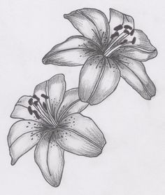 Lily flower drawing and flower tattoo designs lily tatto flower drawings Lily Tattoo Design, Flower Tattoo Designs, Tattoo Sketches, Tattoo Drawings, Flor Tattoo, Lilies Drawing, Lily Flower Tattoos, Flower Sketches, Flower Drawings