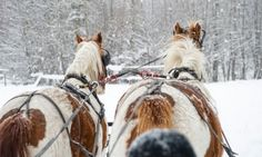 Red Lodge Montana Sleigh Rides - I think we might have to take Rowan on a winter sleigh ride! We grew up on a ranch and two of our neighbors had sleighs, 'the pug' and a box sled. Telluride Colorado, Breckenridge Colorado, Breckenridge Lodging, Colorado Usa, Red Lodge Montana, Starved Rock State Park, Dashing Through The Snow, Living In Colorado, Back Road