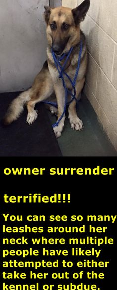 Labeled as a 'fence jumper'. Is that a reason to get rid of your dog???? #A1702948 Miami Dade https://www.facebook.com/urgentdogsofmiami/photos/pb.191859757515102.-2207520000.1433547788./987727591261644/?type=3&theater