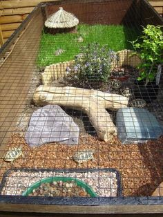 Tortoise Outdoor Enclosure Information - Page 7 - Reptile Forums