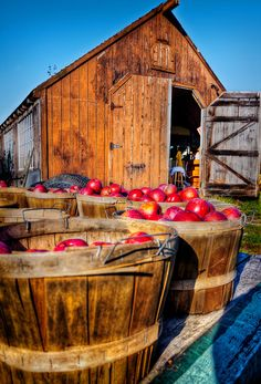 "Apple Harvest at Ashley's in Acushnet, MA. Photo featured on the cover of the September, 2013, issue of ""South Shore Living Magazine"". 