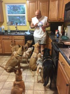Foster Dad and his pack. -Stray Animal Adoption Program