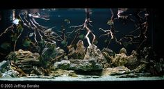 Aqua scaping biotope | 2003 AGA Aquascaping Contest - Entry #76