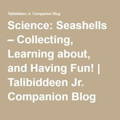 Science: Seashells – Collecting, Learning about, and Having Fun! | Talibiddeen Jr. Companion Blog