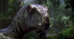 Bildergebnis für Real Raptors