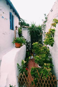 Mykonos, Santorini, Greece Vacation, Paris Apartments, Hotels And Resorts, Athens, Wanderlust, Plants, Plant