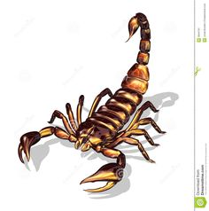Scorpion Stock Illustrations, Vectors, & Clipart – (2,346 Stock ...