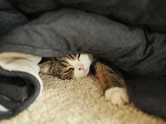 「えー、もうちょっと。」 Maru:[This is my important bed.]