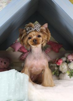 Korean Dog Grooming Style — Yorkshire Terriër