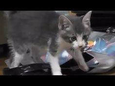 Football Cat ,Cat Video,Cats and kittens 子猫動画&猫画像♪猫ニャーゴyoutube