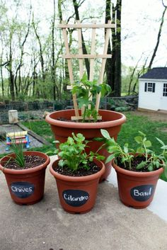 Container Gardening for herbs with chalk board paint