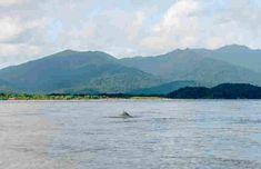 Cananéia SP - O que fazer, onde ficar e dicas em 2018 | Mundomio Mountains, Nature, Travel, Dolphins, Voyage, Tips, Places, Viajes, Traveling
