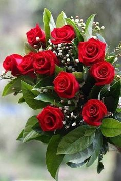 Precious Tips for Outdoor Gardens - Modern Beautiful Red Roses, Beautiful Flowers Wallpapers, Romantic Roses, Amazing Flowers, Pretty Flowers, Red Flowers, Rose Flower Photos, Flower Images, Rose Flower Wallpaper