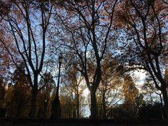 La taconera vista desde la cuesta. #colorful #colors #color #new #day #pamplona #navarra #tree #trees #park #amazing #instagramers #instadaily #instagram #instaday #instagood #instacool #parque #woods #sky #shades #shape #love