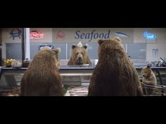E*TRADE Commercial – Bear Market - YouTube E Trade, Brown Bears, Best Commercials, Viral Videos, Marketing, News, Tv, Funny, Pictures
