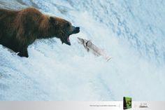 Periodicos Asociados: Salmon | Ads of the World™
