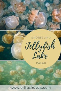 Jellyfish Lake is one of the world's most incredible places. Snorkel in Jellyfish Lake Palau to see what it is like to swim in a real world lava lamp. Love Island, Wildlife Conservation, Beautiful Islands, Jellyfish, Australia Travel, Day Trip, Snorkeling, Travel Guides, Lava Lamp
