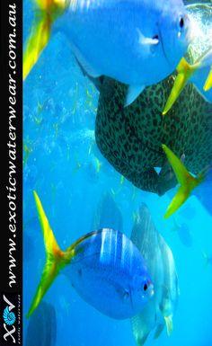 Yaaaaaaay!!!!! Hello spring, summer around the corner! Buy colorful stinger suits online www.exoticwaterwear.com.au #snorkelling #stingersuit #scubadiving