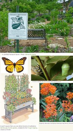 Create a Monarch Waystation. Make a home for these endangered butterflies by planting milkweed. Read more. Create a Monarch Waystation. Make a home for these endangered butterflies by planting milkweed. Read more. Butterfly Garden Plants, Butterfly Feeder, Diy Butterfly, Small Flower Gardens, Small Flowers, Cottage Garden Design, Hummingbird Garden, Garden Supplies, Beautiful Butterflies