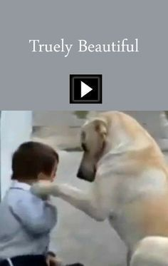 This is one of the most beautiful videos I have ever seen. Sweet mama dog interacting with a beautiful Down Syndrome Child. I Love Dogs, Puppy Love, Cute Dogs, Animals And Pets, Funny Animals, Cute Animals, Funny Cats, Beautiful Children, Animals Beautiful