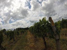 New York state Casa Larga 2016 winery