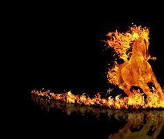 Fire horse Artistic Wallpaper, Horse Wallpaper, Wallpaper Pictures, Wallpaper Backgrounds, Computer Wallpaper, Fire Horse, Cool Fire, Flame Art, Fire Image