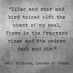 Lilac and star and bird twined with the chant of my soul, There in the fragrant pines and the cedars dusk and dim. -Walt Whitman, Leaves of Grass The Words, Cool Words, Poem Quotes, Words Quotes, Sayings, Pretty Words, Beautiful Words, Walt Whitman Quotes, Whitman Poems