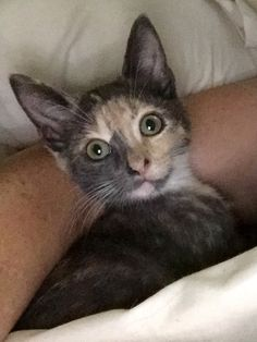 Sophie, now 10 weeks old and ready to be adopted. She is very shy right now, and needs some extra TLC.
