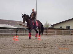 Reitunterricht: Kompetenter Reitunterricht - (Jung)pferdeausbildung - Beritt