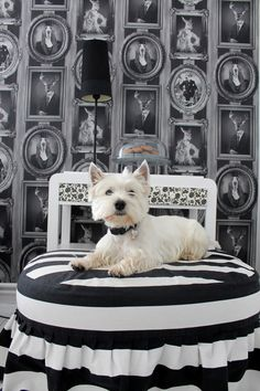 West Highland White Terrier - like royalty! #westies