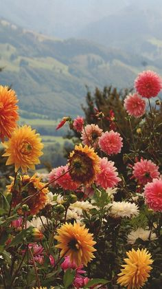 Oh what a beautiful setting for a garden of Dahlia flowers. Aesthetic Iphone Wallpaper, Aesthetic Wallpapers, Flower Wallpaper, Wallpaper Backgrounds, Spring Backgrounds, Digital Backgrounds, Wallpaper Desktop, Wild Flowers, Beautiful Flowers