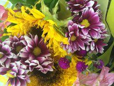 Flowers - My pics!