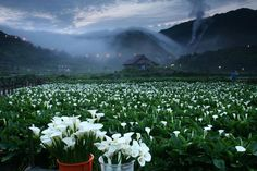 Autumn in Yangmingshan National Park,Taiwan