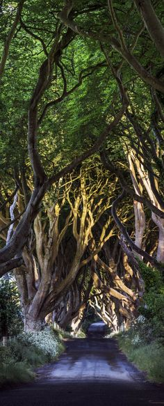The Dark Hedges Co. Antrim, Bregagh Road, Northern Ireland | Check Out The Most Majestically Trees In The World!