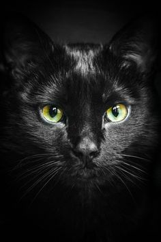 An Cat Dub (The Black Cat), chat noir