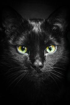 An Cat Dub (The Black Cat)