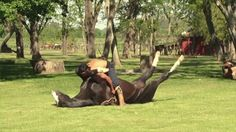 Among the stranger forms of the meditative exercise is horse yoga -- practiced in The Doma India School established over 50 years ago in San Luis, Argentina