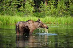 Alaska Encyclopedia คู่มือเที่ยวอลาสกาฉบับช่างภาพ - Pantip